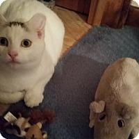 Adopt A Pet :: Squiggy - Newburgh, NY