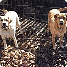 Adopt A Pet :: Duke and Daisy