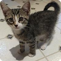 Adopt A Pet :: Griffin - Colmar, PA