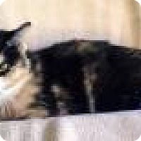 Adopt A Pet :: Calico Jane - Newport, KY