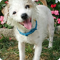 Adopt A Pet :: Lin - Bridgeton, MO