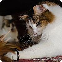 Adopt A Pet :: Polly (and Flo) - Novato, CA