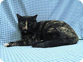 Domestic Shorthair Cat for adoption in Redwood Falls, Minnesota - Porscha