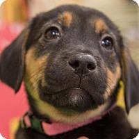 Adopt A Pet :: Sadie - Round Lake Beach, IL