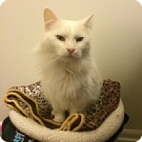 Adopt A Pet :: Bianca - McHenry, IL