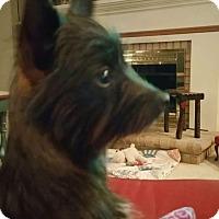 Adopt A Pet :: Mazzie - Bedminster, NJ