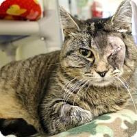 Adopt A Pet :: Marigold - Bellevue, WA