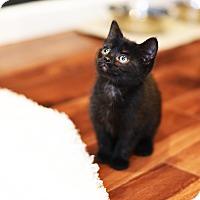 Adopt A Pet :: Ali - Xenia, OH