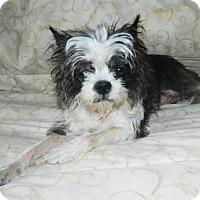 Adopt A Pet :: Felix - Umatilla, FL