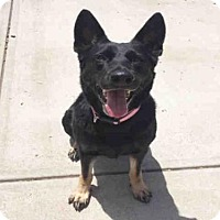 Adopt A Pet :: LOLA - Canfield, OH