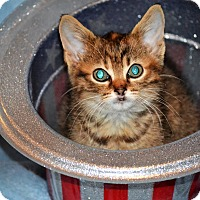 Adopt A Pet :: Babs - Albemarle, NC