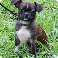 Adopt A Pet :: Rocky (3 lb) Video! - SUSSEX, NJ