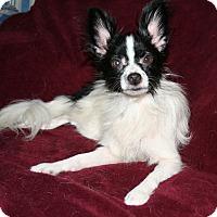 Adopt A Pet :: Lil Bit - Umatilla, FL