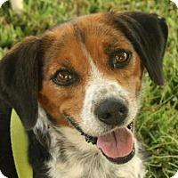 Adopt A Pet :: Grace - Rockville, MD