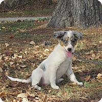 Adopt A Pet :: SKYE - Hartford, CT