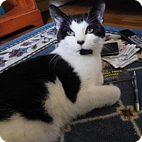 Adopt A Pet :: Oreo - Hartford, CT