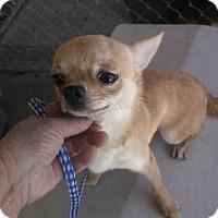 Adopt A Pet :: Cracker - Bonifay, FL