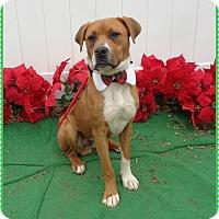 Adopt A Pet :: SEAN see also HANNITY - Marietta, GA
