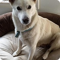 Adopt A Pet :: Yuki - Newport Beach, CA