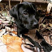 Adopt A Pet :: Jeehuon - Houston, TX
