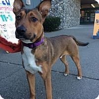 Adopt A Pet :: Ozzie - Adoption Pending - Gig Harbor, WA