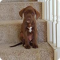 Adopt A Pet :: Prescott - Houston, TX