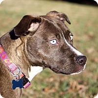 Adopt A Pet :: Raina-pending adoption - Burlington, NC
