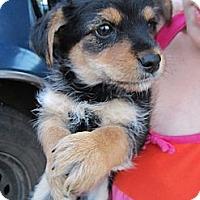 Adopt A Pet :: Gitta- Adopted - Glastonbury, CT