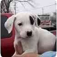 Adopt A Pet :: Jack - Pending Adoption - Adamsville, TN