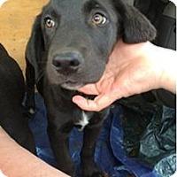 Adopt A Pet :: Piper - Oak Brook, IL