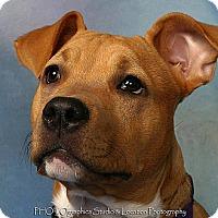 Adopt A Pet :: Caasi - Metairie, LA