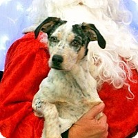 Adopt A Pet :: Jax - River Falls, WI