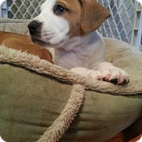 Adopt A Pet :: Rou - Marlton, NJ