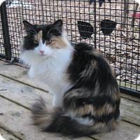 Adopt A Pet :: Sadie (FeLV+) - Fayetteville, GA