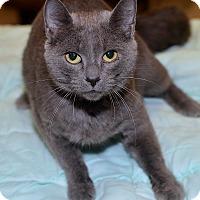 Adopt A Pet :: Mia - Medina, OH