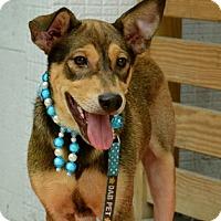 Adopt A Pet :: Tucker - Surrey, BC