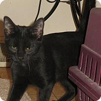 Adopt A Pet :: Blackberry - Bedford, VA