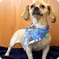 Adopt A Pet :: Lasso - Plainfield, IL