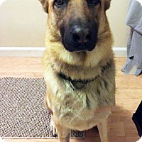 Adopt A Pet :: Atticus - Courtesy Post - San Diego, CA