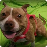 Adopt A Pet :: Akiva - Muskegon, MI