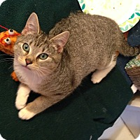 Adopt A Pet :: Twilight - Stafford, VA