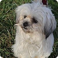 Adopt A Pet :: Jade - Waldorf, MD