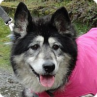 Adopt A Pet :: SEQUOIA - Seattle, WA