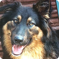 Adopt A Pet :: CHESLOW VON CHLODWIG - Los Angeles, CA