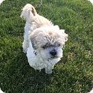 Adopt A Pet :: Kelly