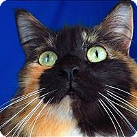 Adopt A Pet :: Little Missy - Sherwood, OR