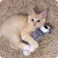 Adopt A Pet :: Nugget - Agoura Hills, CA