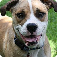 Adopt A Pet :: Hoss - Joplin, MO