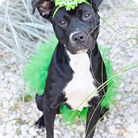 Adopt A Pet :: Sadie - Charlotte, NC