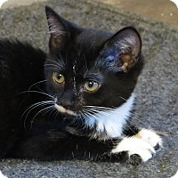 Adopt A Pet :: Caitlyn - Unionville, PA